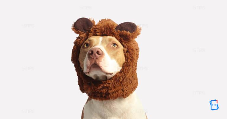 cane con orecchie